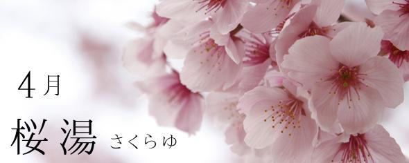 4月 桜湯 さくらゆ